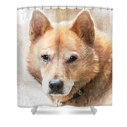 Korean Jindo Portrait Shower Curtain by Eleanor Abramson
