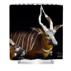 Kudo Resting Shower Curtain by Melissa Messick