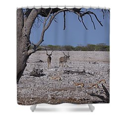 Shower Curtain featuring the photograph Kudu And Springbok 2 by Ernie Echols