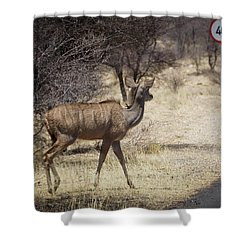 Shower Curtain featuring the photograph Kudu Crossing by Ernie Echols