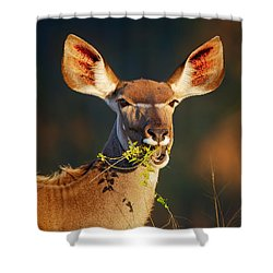 Kudu Portrait Eating Green Leaves Shower Curtain