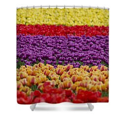La Conner Bands Of Colour 2015 Shower Curtain by Maria Janicki