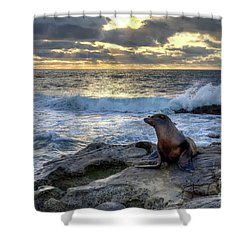 La Jolla Sea Lion Shower Curtain by Eddie Yerkish