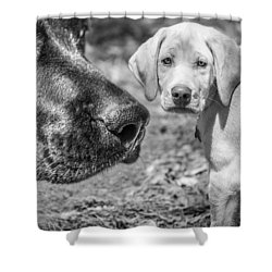 Lab Love Shower Curtain