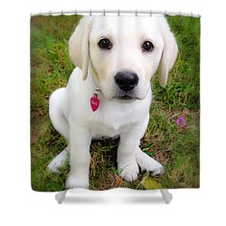 Lab Puppy Shower Curtain by Stephen Anderson