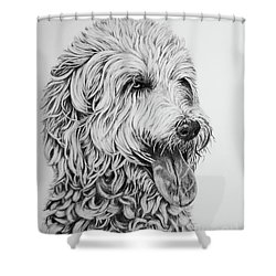 Shower Curtain featuring the drawing Labradoodle by Terri Mills