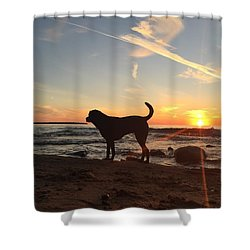 Labrador Dreams Shower Curtain