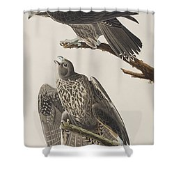 Labrador Falcon Shower Curtain by John James Audubon