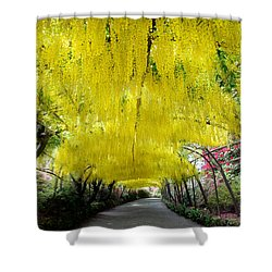 Laburnum Arch, Bodnant Garden Shower Curtain
