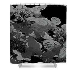Lace Cap Hydrangea In Black And White Shower Curtain by Smilin Eyes  Treasures