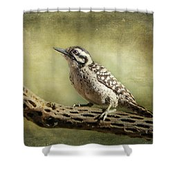 Ladder-backed Woodpecker Shower Curtain