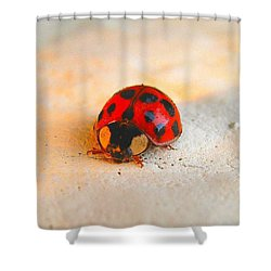 Shower Curtain featuring the photograph Lady Bug 2 by John King