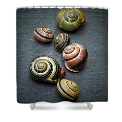 Lady Bug And Snail Shells 1 Shower Curtain by Karen Stahlros