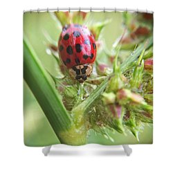 Lady Bug On Barnyard Grass Macro Shower Curtain by Robyn Stacey