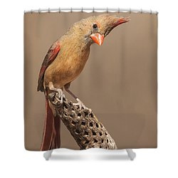 Lady Cardinal And Cholla Shower Curtain by Ruth Jolly