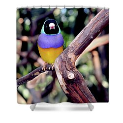 Lady Gouldian Finch Shower Curtain