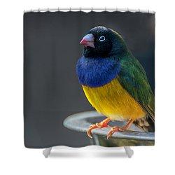 Lady Gouldian Finch Shower Curtain
