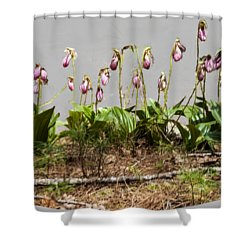 Lady Slippers Shower Curtain by Daniel Hebard