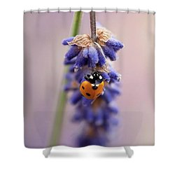 Ladybird On Norfolk Lavender  #norfolk Shower Curtain by John Edwards