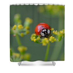 Ladybug In Red Shower Curtain