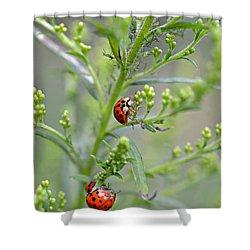 Ladybug Ladybug... Shower Curtain by Lila Fisher-Wenzel