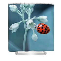 Shower Curtain featuring the photograph Ladybug by Mark Fuller