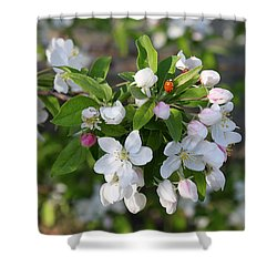 Ladybug On Cherry Blossoms Shower Curtain