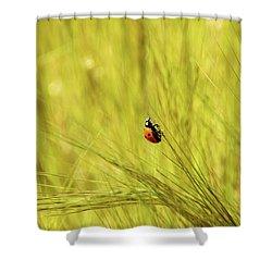 Ladybug In A Wheat Field Shower Curtain by Yoel Koskas