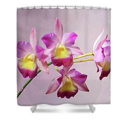 Laeliocatonia Hybrid Orchids V2 Shower Curtain