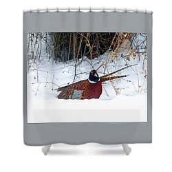 Shower Curtain featuring the photograph Lake Country Pheasant 2 by Will Borden