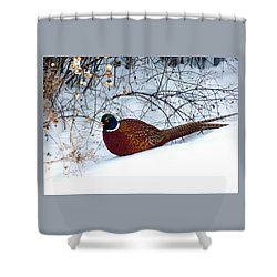 Shower Curtain featuring the photograph Lake Country Pheasant by Will Borden