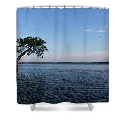 Lake Disston Cypress #2 Shower Curtain by Paul Rebmann