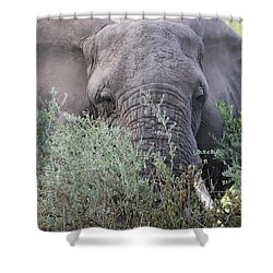 Shower Curtain featuring the photograph Lake Manyara Elephant by Gary Hall