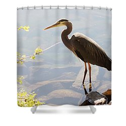 Lake Padden Heron Shower Curtain by Karen Molenaar Terrell
