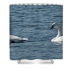 Lake Visiters Shower Curtain by Rick Friedle