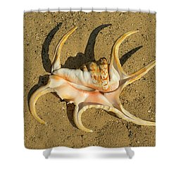 Shower Curtain featuring the photograph Lambis Arthritica Spider Conch by Frank Wilson