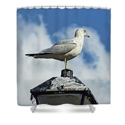 Shower Curtain featuring the photograph Lamp Post Eddie by Jan Amiss Photography