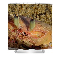 Lamu Island - Crab - Close Up 1 Shower Curtain