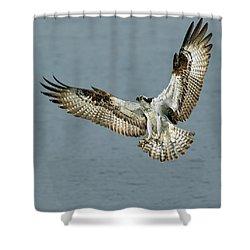 Osprey Approach Shower Curtain
