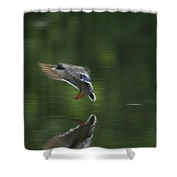 Landing Shower Curtain by Karol Livote