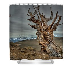 Landing On Bristlecone Pine Shower Curtain
