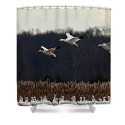 Landing Shower Curtain by Tamera James