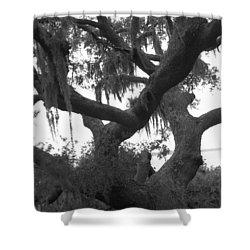 Lands End Talking Tree Shower Curtain