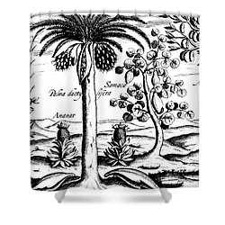 Landscape, Illustration From India Orientalis, 1598  Shower Curtain