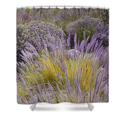 Landscape With Purple Grasses Shower Curtain by Ben and Raisa Gertsberg