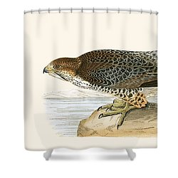 Lanner Falcon Shower Curtain by English School