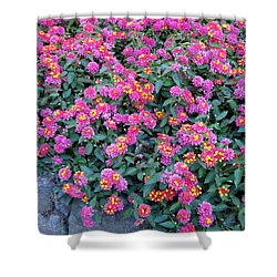 Lantana Shower Curtain by Betty Buller Whitehead