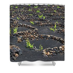 Lanzarote Vineyards Shower Curtain by Delphimages Photo Creations