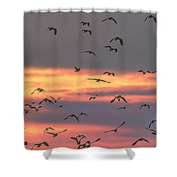Lapwings At Sunset Shower Curtain by Jeff Townsend