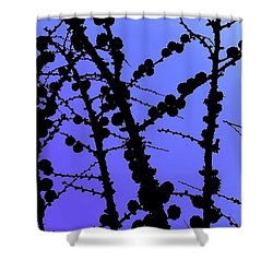 Larch Cones Against The Sky Shower Curtain